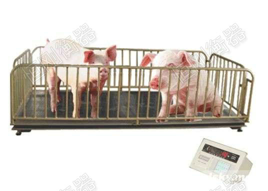品质保证的牲畜秤
