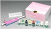 mian羊主要组织相rong性复合ti(MHC)ELISAshi剂盒