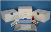 96T/48T人皮肤T细胞虏获趋化因子(CTACK/CCL27)ELISA试剂盒